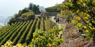 VITI 2020: la nouvelle stratégie de l'interprofession du Valais